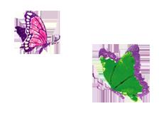 シャンドゥラローズ 蝶イメージ